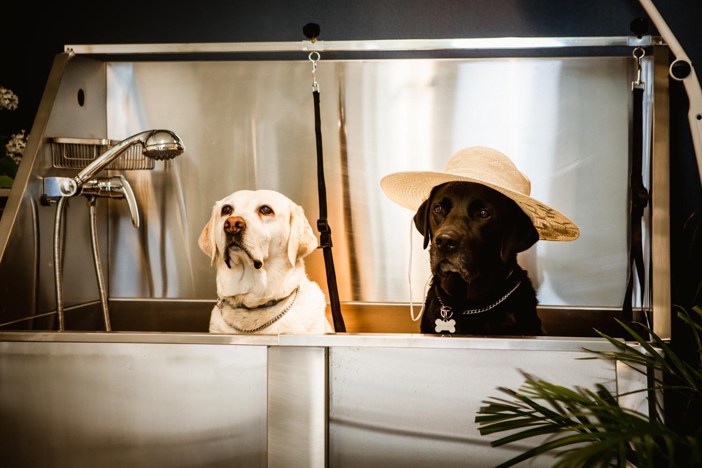 Hundkompisar som njuter av ett välbehövligt bad