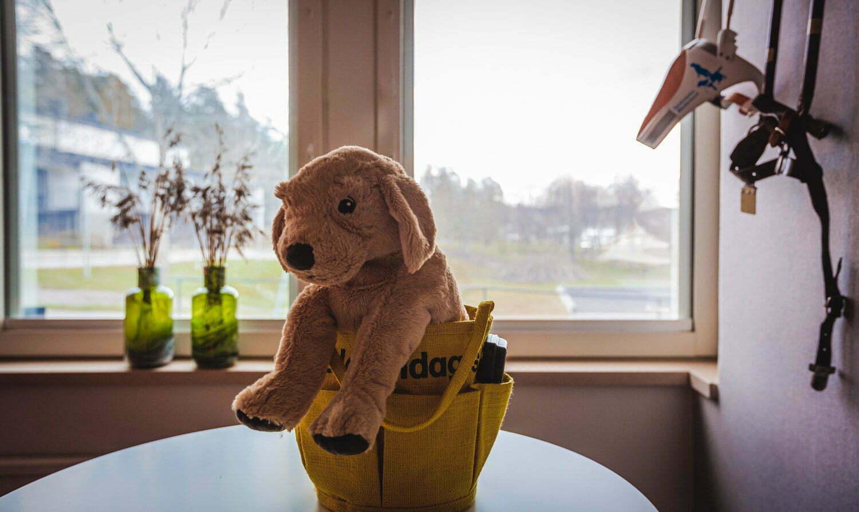 Mjukisdjur i grupprumemt Ledarhunden Almåsa Havshotell