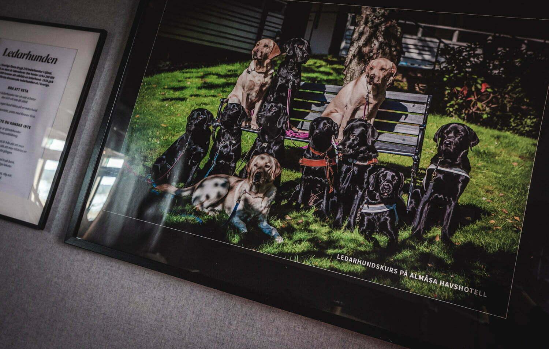 Foto med ledarhundar